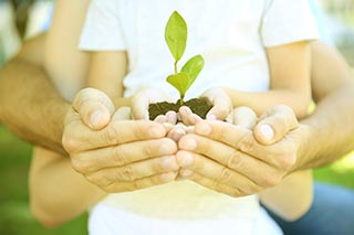 Family holding soil with green plant in hands, closeup. hypnosis for children